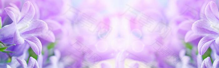 唯美紫色花朵海报背景