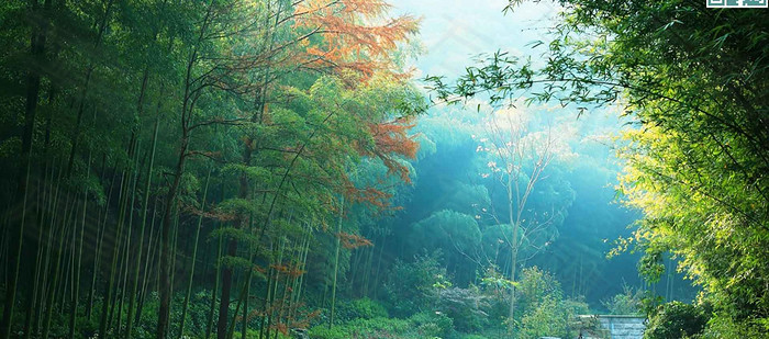 夏季绿色自然背景