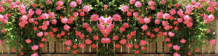 红花 绿叶 栅栏 背景图
