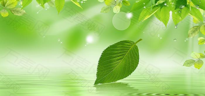 清新绿叶背景