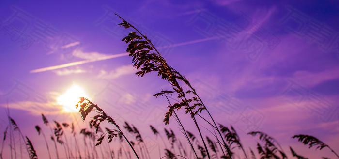 天空植物背景