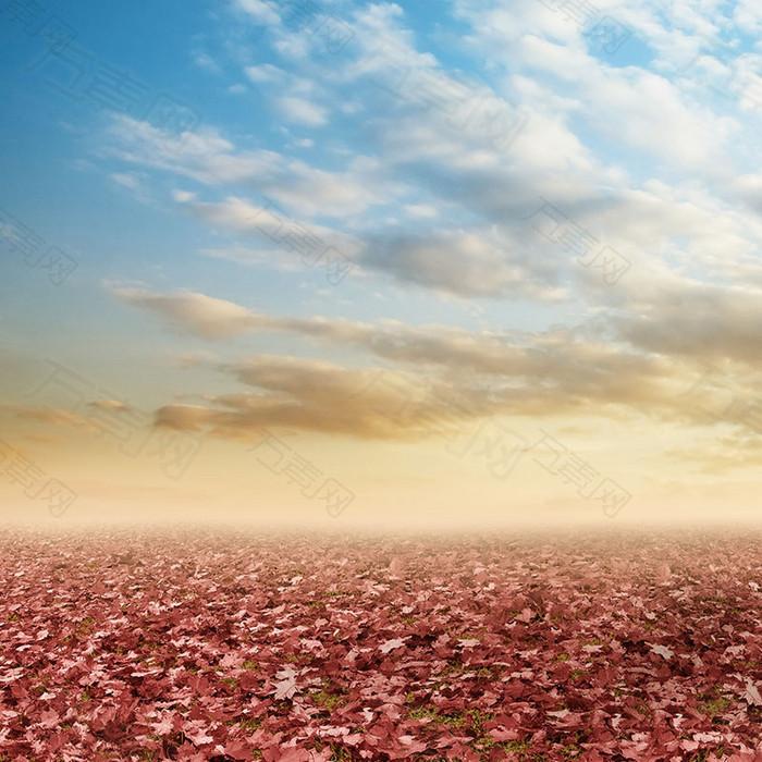 秋天落叶唯美景色