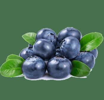 蓝莓图片素材