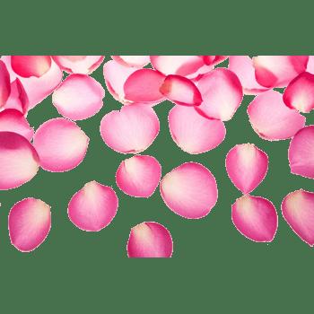 精美粉色玫瑰花瓣