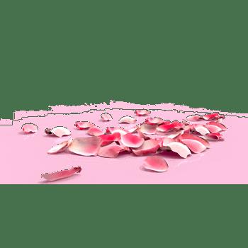 一堆桃花花瓣