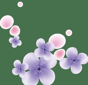 紫色的花薰衣草
