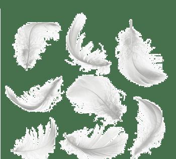 散落的白色羽毛高清图片