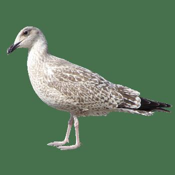 手绘动物元素虫鸟元素免费下载