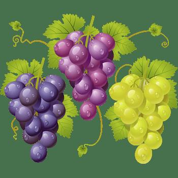 矢量水果樱葡萄