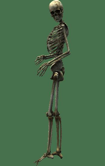 骷髅骨架医学研究素材