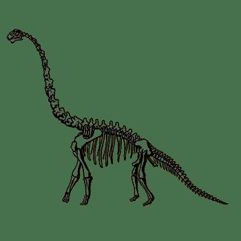 梁龙恐龙化石