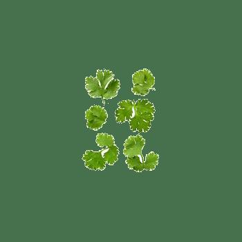 漂浮的叶子