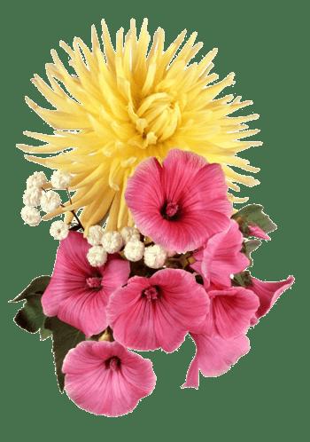 淡黄色菊花搭粉色花
