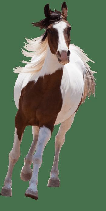 手绘马素材马 奔跑的马