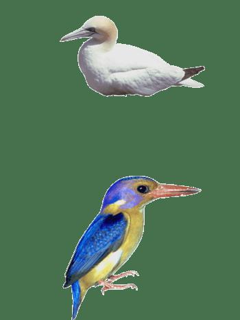 鸭和鸟免抠素材
