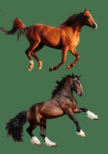 奔跑的棕色马