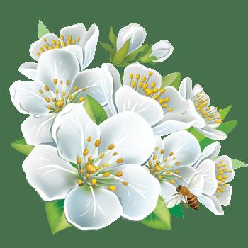 卡通手绘白色花朵png素材