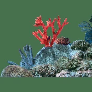 海底植物 罕见植物