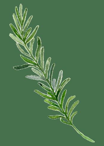 手绘叶子边框