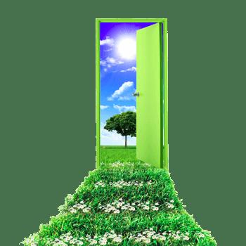 绿色门前的草坪
