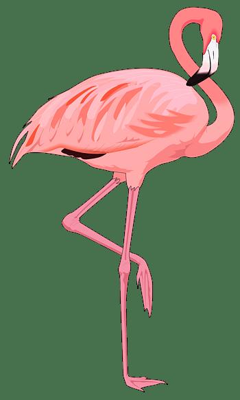 鸟的素材动物免费下载