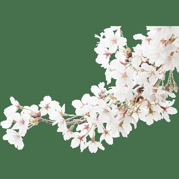 桃花春天背景素材