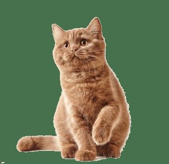 棕色可爱小猫咪