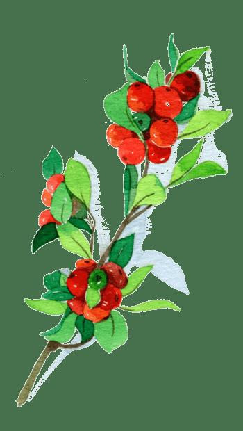 水粉樱桃图片素材