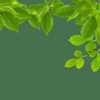 春季绿色遮掩树叶
