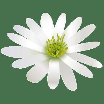 白色花朵立体花