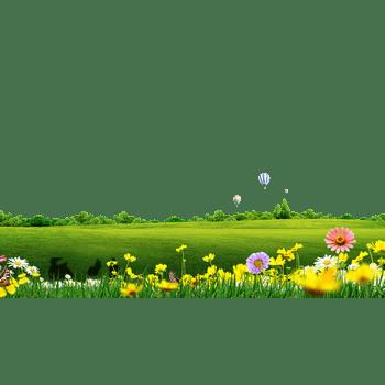 绿色草坪背景菊花装饰