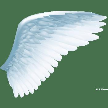 淡蓝色羽毛翅膀