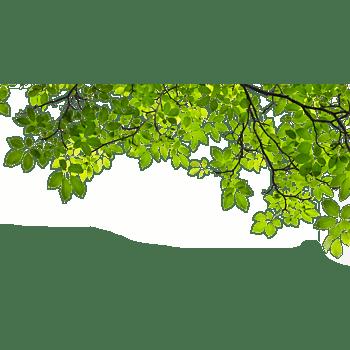 春天树叶背景素材高清图片