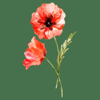 水彩红色花朵图片