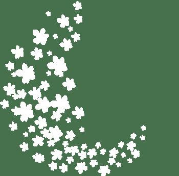 漂浮白色花朵