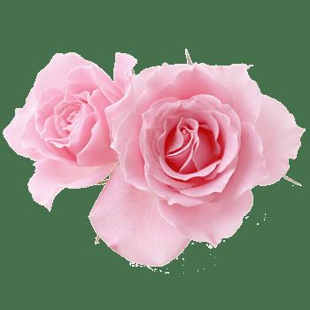 粉色花朵 罕见植物