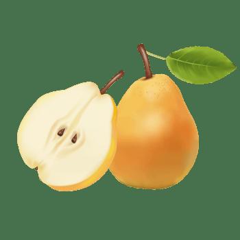 手绘新疆香梨