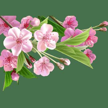 梦幻粉色杏花