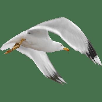 手绘动物虫鸟