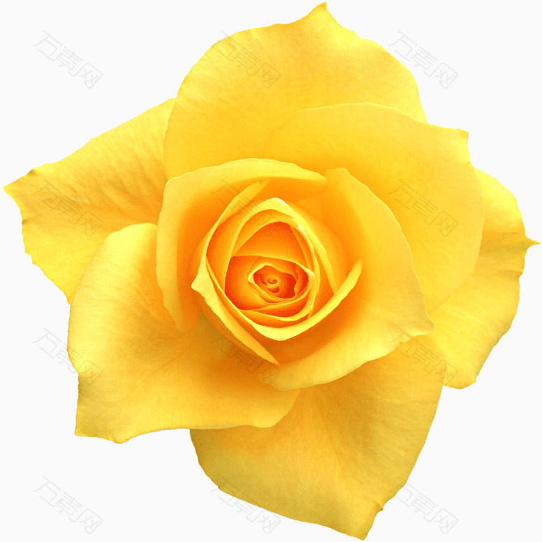 鲜花海报背景花朵图片