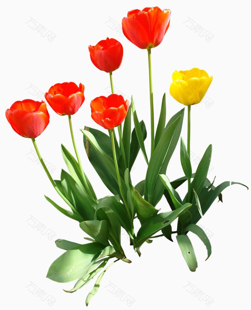 鲜花抽象鲜花图片 唯美花束
