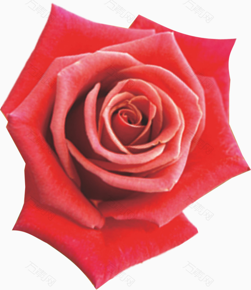 玫瑰花图案