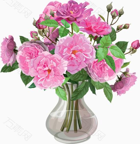 花卉插画植物花草素材