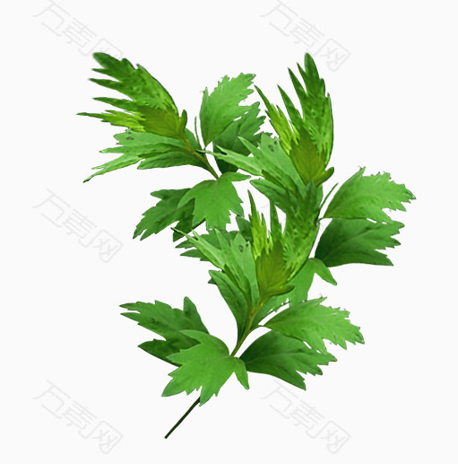 绿色艾草艾叶