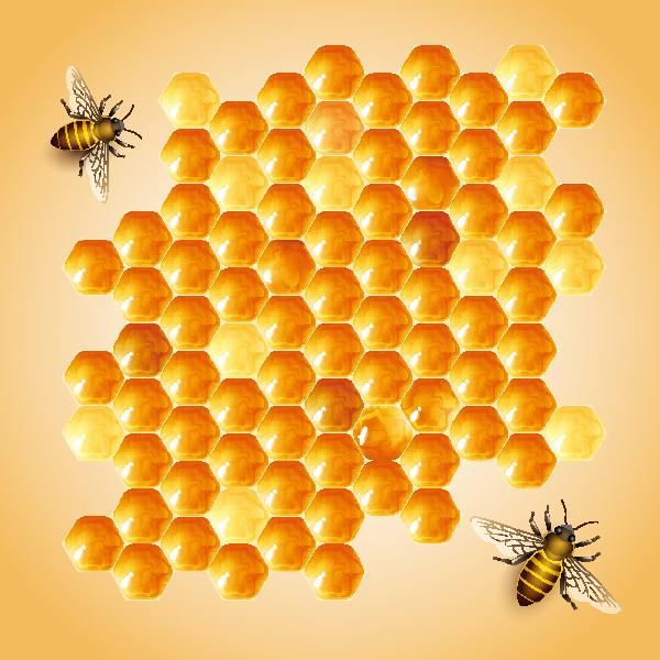 蜜蜂蜂巢设计